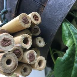 Puristisches Bambusbündel
