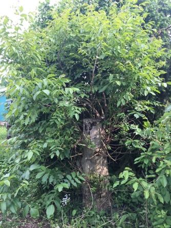 Sch-P2 Baumpatenschaft