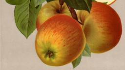 Obst-Hochstamm